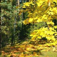 Осенние краски :: Милешкин Владимир Алексеевич
