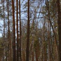 В лесу :: grovs