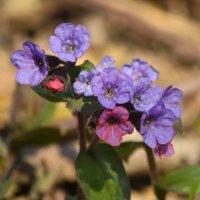 Весенние цветы :: Денис Матвеев