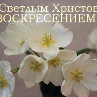 Поздравление :: Леонид
