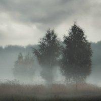 Туман :: Анна (Анка) Салтыкова
