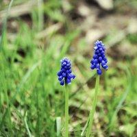 Лесные цветы :: Josef Kaston
