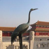 Императорская цапля Пекин :: Владимир
