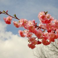 Нежность розовых лепестков... :: Galina Dzubina