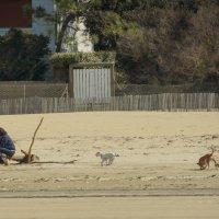 Просто люди и животные на берегу. :: Елена Мартынова