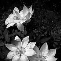цветы :: Игорь Свет