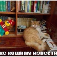 Даже кошкам известно - читать интересно! :: Викторина Срыбна