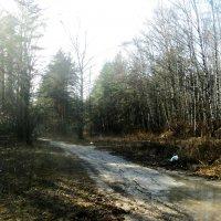 Пробуждение леса после зимней спячки. :: Ольга Кривых