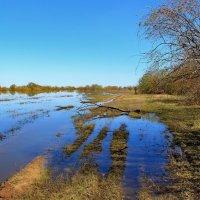 Стихают вод мятежные разливы... :: Лесо-Вед (Баранов)