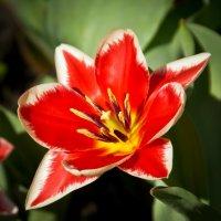 Аленький цветочек :: Elena Ignatova