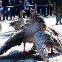 Павловские охоты 2 :: Любовь Нефёдова