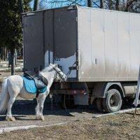 Пони и газель :: Дмитрий Чулков