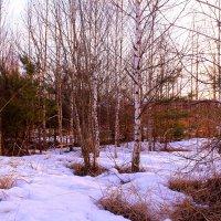 В апрельском лесу :: Татьяна Ломтева