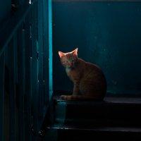 Подъездный кот :: Владимир Новиков