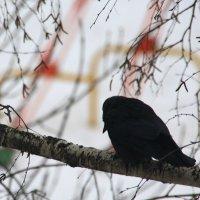 ..Печальная  ворона... :: Валерия  Полещикова