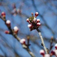 Весна пришла!!! :: Ксения Довгопол
