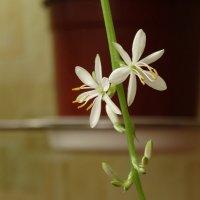 Комнатное растение :: Владимир Гилясев