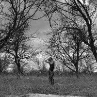 Яблоневые сады :: Женя Рыжов