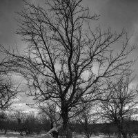Соня у яблони :: Женя Рыжов