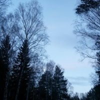 Синий вечер. :: Ольга
