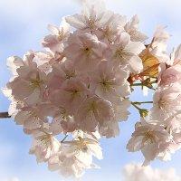 Цветы в небе :: Alexander Andronik