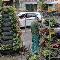 Садовник в Сан-Ремо :: Василий