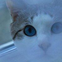 """""""Кошачьи глаза везде и всюду, они, как звезды на небе, не оставляют людей в одиночестве"""". :: Zhanna Kushnareva"""