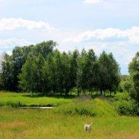 Сельский пейзаж. :: оля san-alondra