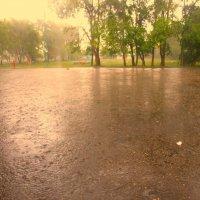 дождик :: Инга Кумпан