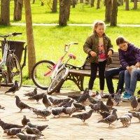 Голуби :: Serega Денисенко