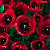kırmızı! :: Selman Şentürk