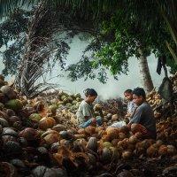 Coconut Milk :: алексей афанасьев
