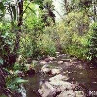 Красивые места :: JS PhotoCompany