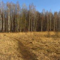 IMG_5119 - Классический апрель :: Андрей Лукьянов