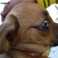 Собака Талисман :: Наталья (ShadeNataly) Мельник