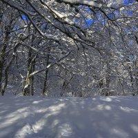 Чатырдагский зимний лес :: Михаил Баевский