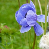 цветы :: Николай Петровский