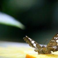 вот-вот и залетают вокруг разноцветные бабочки :: Олег Лукьянов