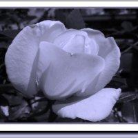 Мелодия белых ночей :: Vanda Kremer