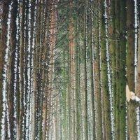 Зимний лес :: Диана Лукашова