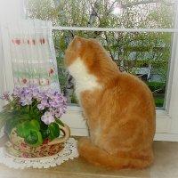 А за окном уже весна… :: Galina Dzubina
