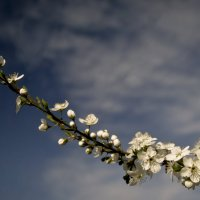 Весенний цвет :: Игорь Кубай