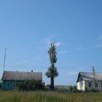 Чудо - дерево. :: Мила