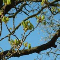 пробуждение весны :: Oxi --