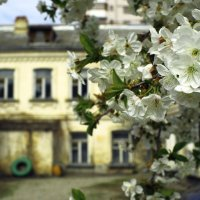 Весна :: андрей