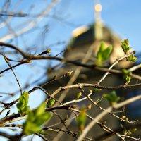 красота весны :: Galina Belugina