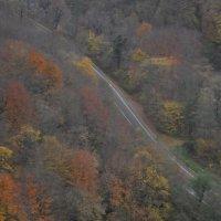 Дорога в осень :: Олеся Енина