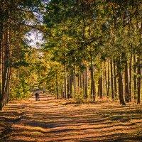 Прогулка в лесу :: Александр Петрученко
