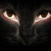 человеческие глаза и фото кошки :: Карина Родионовская