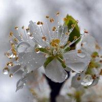 Дождливая весна :: Nina Streapan